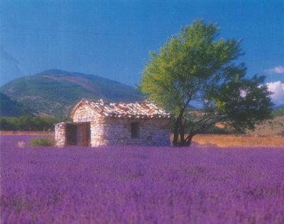 provence-pic.jpg